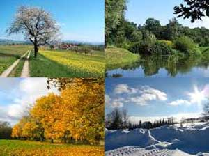 The 4 different Seasons